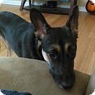 Adopt A Pet :: Kodiak / Ranger 4221