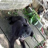 Adopt A Pet :: Duncan - Valparaiso, IN