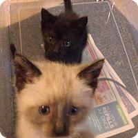 Adopt A Pet :: Sam n Willie - Glen cove, NY