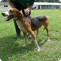 Rhode Island Animal Shelters Adoption