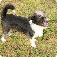 Adopt A Pet :: wi - Spring Valley, NY