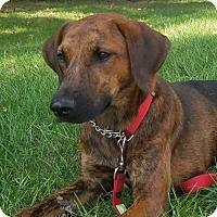 Adopt A Pet :: Brenda - No Longer Accepting Applications - Potomac, MD