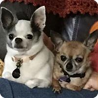 Adopt A Pet :: Lilly - Matthews, NC