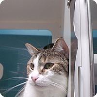Adopt A Pet :: surie - Muskegon, MI