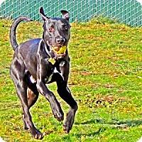 Adopt A Pet :: Kane - Woodburn, OR