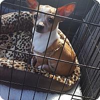 Adopt A Pet :: Bee Bee - Palm Bay, FL
