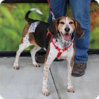 Hound (Unknown Type) Mix Dog for adoption in Albany, New York - EMALIE