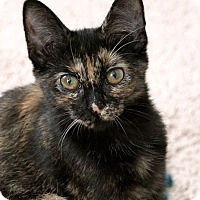 Adopt A Pet :: Mushroom - Durham, NC