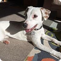 Adopt A Pet :: Jill - Westminster, CO