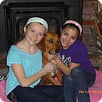 Adopt A Pet :: Melanie - Tunbridge, VT