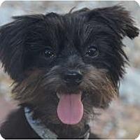Adopt A Pet :: Hershey - Miami, FL