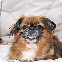 Adopt A Pet :: Homer - Virginia Beach, VA
