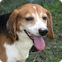 Adopt A Pet :: Buster - Killian, LA