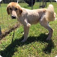 Adopt A Pet :: Peaches - Charlemont, MA