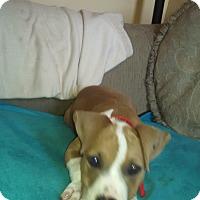 Adopt A Pet :: Sunny - San Diego, CA