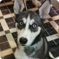Adopt A Pet :: Mishka - Huntsville, TN