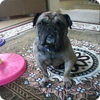 Adopt A Pet :: Dinky - Columbus, OH