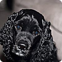 Adopt A Pet :: CHARLIE -- 3 - Tacoma, WA