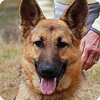 Adopt A Pet :: Maxi - Preston, CT