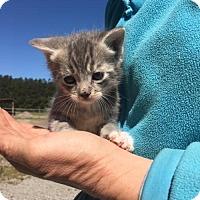Adopt A Pet :: Liam - Washington, DC