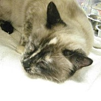 Adopt A Pet :: Camilla - Logan, UT