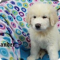 Adopt A Pet :: Zander - Bartonsville, PA