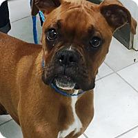 Adopt A Pet :: Sadie - Oswego, IL