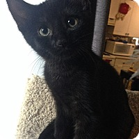 Adopt A Pet :: Onyx - Toronto, ON