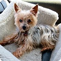 Adopt A Pet :: ElizaHamilton - Studio City, CA