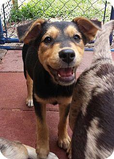 Adopt A Pet :: Katness  - Snow Hill, NC