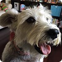 Adopt A Pet :: Coco * - Miami, FL