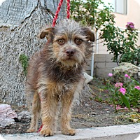 Adopt A Pet :: Marcus - 12 pounds - Los Angeles, CA
