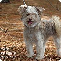 Adopt A Pet :: Puddin - Minneola, FL