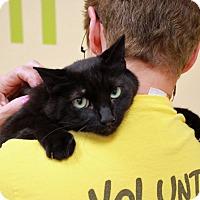 Adopt A Pet :: Jake - Troy, MI