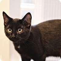 Adopt A Pet :: Russell - Lincoln, NE