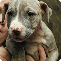 Adopt A Pet :: Aslyn - Fort Madison, IA