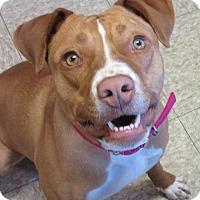 Adopt A Pet :: Nola - Glenwood, MN