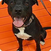 Adopt A Pet :: Alexa #1182 - Arlington Heights, IL
