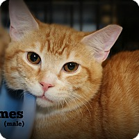 Adopt A Pet :: James - Springfield, PA