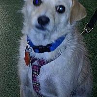 Adopt A Pet :: Frodo - Encino, CA