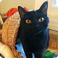 Adopt A Pet :: Apertif - Lombard, IL