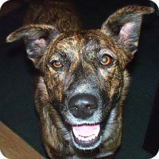 ... Dog   Stillwater, OK   Catahoula Leopard Dog/Australian Cattle Dog Mix