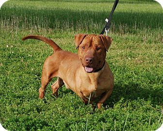 Alfred Hitchcock (Alf) | Adopted Dog | DuQuoin, IL ...