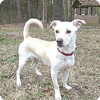 Adopt A Pet :: Coco - Mocksville, NC
