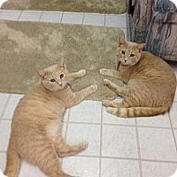 Adopt A Pet :: Pumpkin & Spice - Aiken, SC