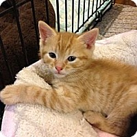 Adopt A Pet :: Rio - Pittstown, NJ