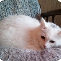 Adopt A Pet :: Nicole - Anchorage, AK
