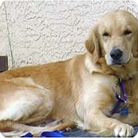 Adopt A Pet :: Frosty - Denver, CO