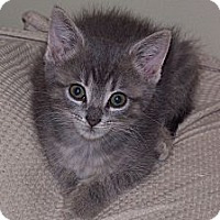 Adopt A Pet :: Lila - Xenia, OH