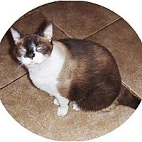 Adopt A Pet :: Binks - Phoenix, AZ